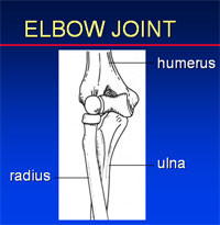 Elbow Dislocation | UW Orthopaedics and Sports Medicine, Seattle