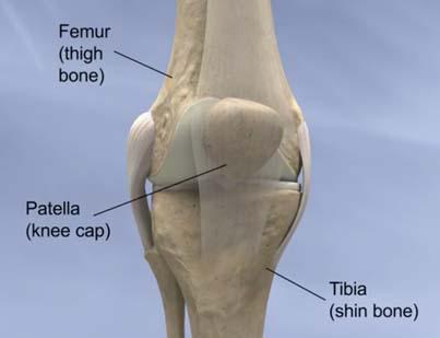 Hip Knee Uw Orthopaedics And Sports Medicine Seattle