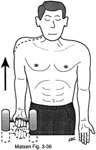 Fig. 5 - Home Exercises for the Unstable Shoulder. Scapular Muscle Exercises. Shoulder Shrug