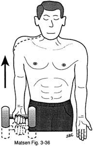Fig. 5 - Home Exercises for the Unstable Shoulder. Scapular Muscle Exercises. Shoulder Shrug